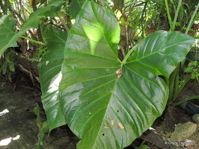 plant-001